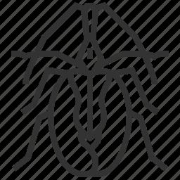 animal, beetle, bug, insect icon
