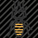 nasute, soldier, animal, bug, insect