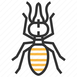 animal, bug, insect, nasute, soldier icon