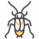 animal, bug, cockroach, insect, oriental icon