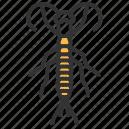 animal, bug, crawler, insect, rock icon