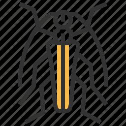 animal, bug, insect, stenocorus, subgenus icon