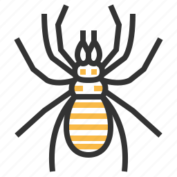 animal, bug, insect, spider, sun icon