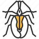 animal, beetle, bug, insect, violin icon
