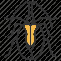 animal, beetle, bug, insect, violin icon