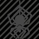arachnid, insect, pest, pest control, spider icon