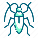 beetle, bug, insect, pest icon