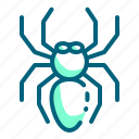 bug, insect, spider, tarantula