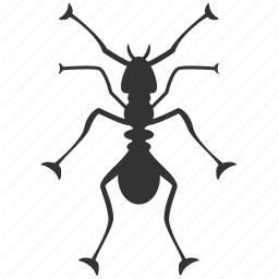 ant, black ant, bug, fire ant, insect, insect pests, insect prohibition icon