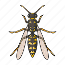 animal, arthropod, insect, wasp icon
