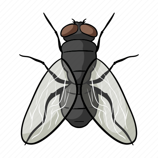 animal, arthropod, fly, insect icon