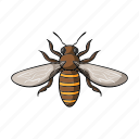 animal, arthropod, bee, honeybee, insect icon