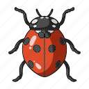 animal, arthropod, insect, ladybird, ladybug icon