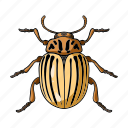 animal, arthropod, colorado beetle, insect icon