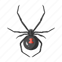 animal, arthropod, insect, spider icon