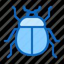 beetle, bug, insect