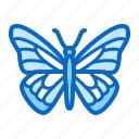 butterfly, insect, moth, spring