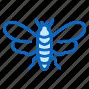 bug, cicada, insect