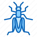 cricket, grasshopper, insect icon