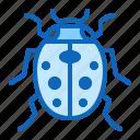 bug, insect, ladybug