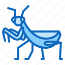 bug, insect, mantis, praying icon