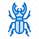 beetle, bug, insect, stag
