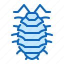 insect, pest, woodlouse