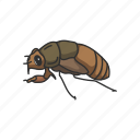 animal, bug, cicada, flying bug, insect, invertebrate, pest icon