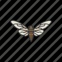 animal, bug, cicada, flying bug, insect, invertebrate, pest icon
