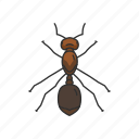 animal, ant, bug, fire ant, insects, invertebrates, red ant icon