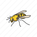 pest, animal, honey bee, flying insect, beeswax, insect, bee icon