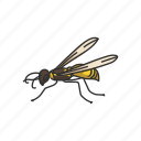 animal, flying insect, insect, moth, pest, skipper, wasp icon