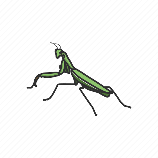 animal, grass insect, grasshopper, insect, mantis, pest icon