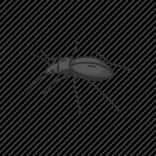 animal, beetle, bug, darkling beetle, insects, pest, scarab icon
