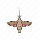 animal, clearwing moth, hummingbird moth, insects, moth icon