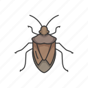 pest, beetle, animal, stink bug, bug, insect, shield bug