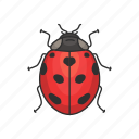 animal, bug, insects, lady beetle, ladybird, ladybug icon