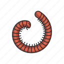 animal, insect, insects, millipede, pest, snake millipede icon