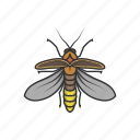 animal, bug, firefly, glowworm, insects, lightning bug icon