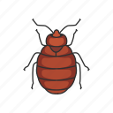 animal, bed bug, blood-feeding insects, bug, insects, parasite, pest icon