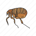 animal, bloodsucker, bloodsucker insect, flea, fleas, insects, parasite icon