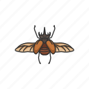 animal, beetle, bug, insect, pest, scarab icon