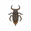 animal, bug, electric-light-bug, insects, toe-bitters, water bug icon