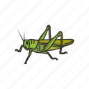animal, dung beetle, grasshopper, insects, locust, red locust, rollers icon