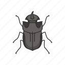 animal, beetle, dung beetle, dwellers, insects icon