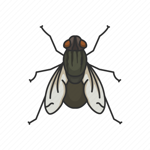 animal, bloodsucker, fly, housefly, insect, invertebrate, pest icon