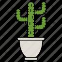 plant, flower pot, plant pot, cactus, cacti, succulent plants