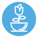 flower, flowering, flowers, home, interior, pot, rose icon