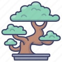 bonsai, plant, potted, tree