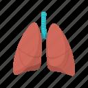 anatomy, cartoon, health, human, lung, medical, organ